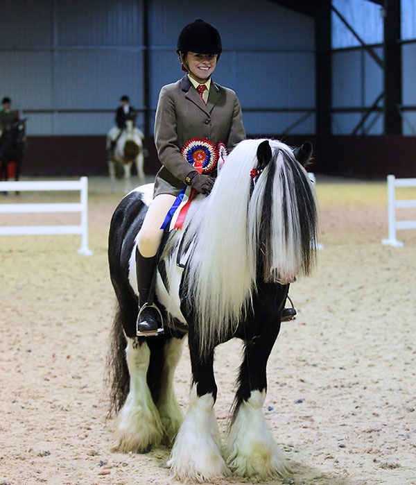 Coloured Cob Highfield Equestrian at Howe