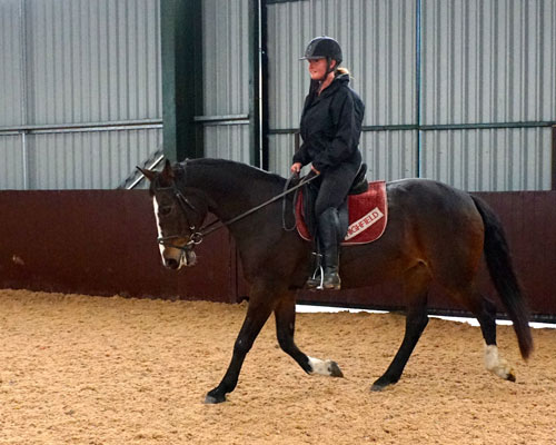 Highfield at Howe Riding school horse
